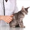Ветеринарные клиники в Теньгушево